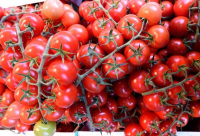 Der Tomaten-Erfolg – wie Rosii drei Meter hoch wächst