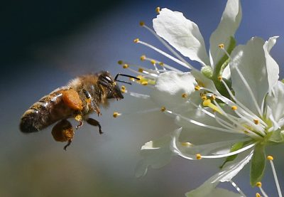 Ein Schlemmerparadies für Bienen? So geht's!