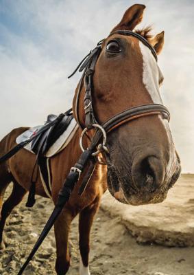Pferdetrainerin aus Leidenschaft