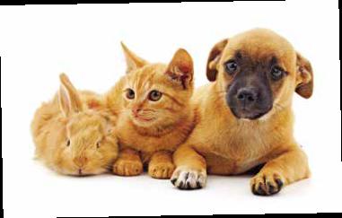 Verschenken Sie doch mal eine Tierpatenschaft
