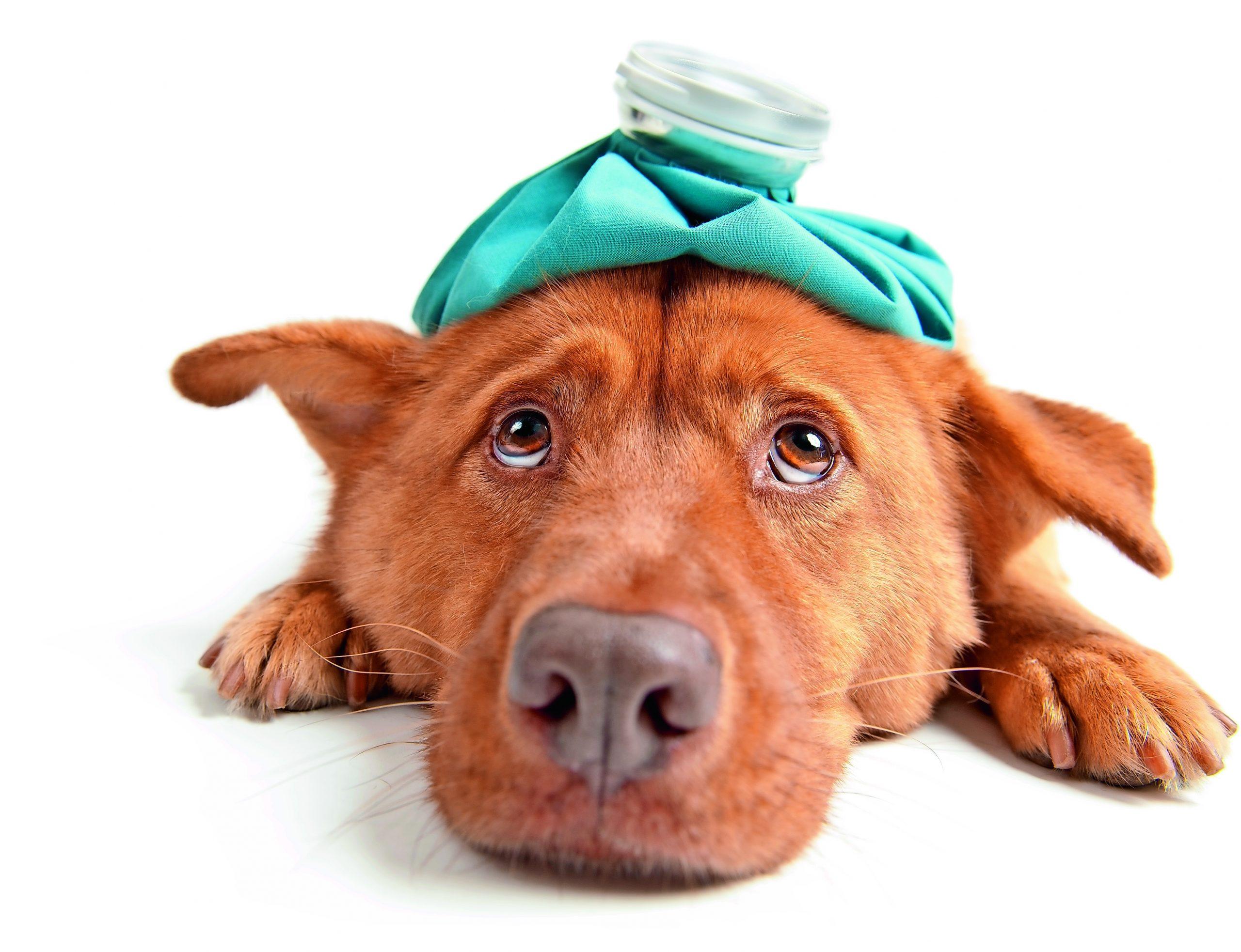 Worauf Sie bei einer Tierkrankenversicherung achten sollten