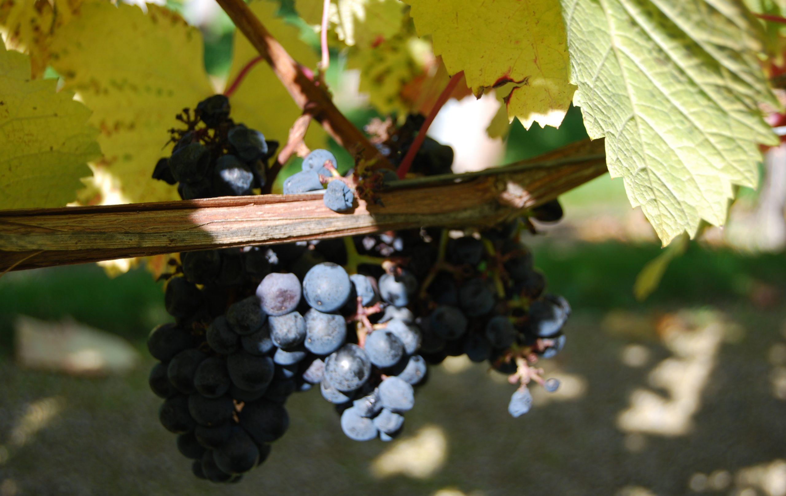 Tagesfahrt nach Zielona Gora mit Weinverkostung