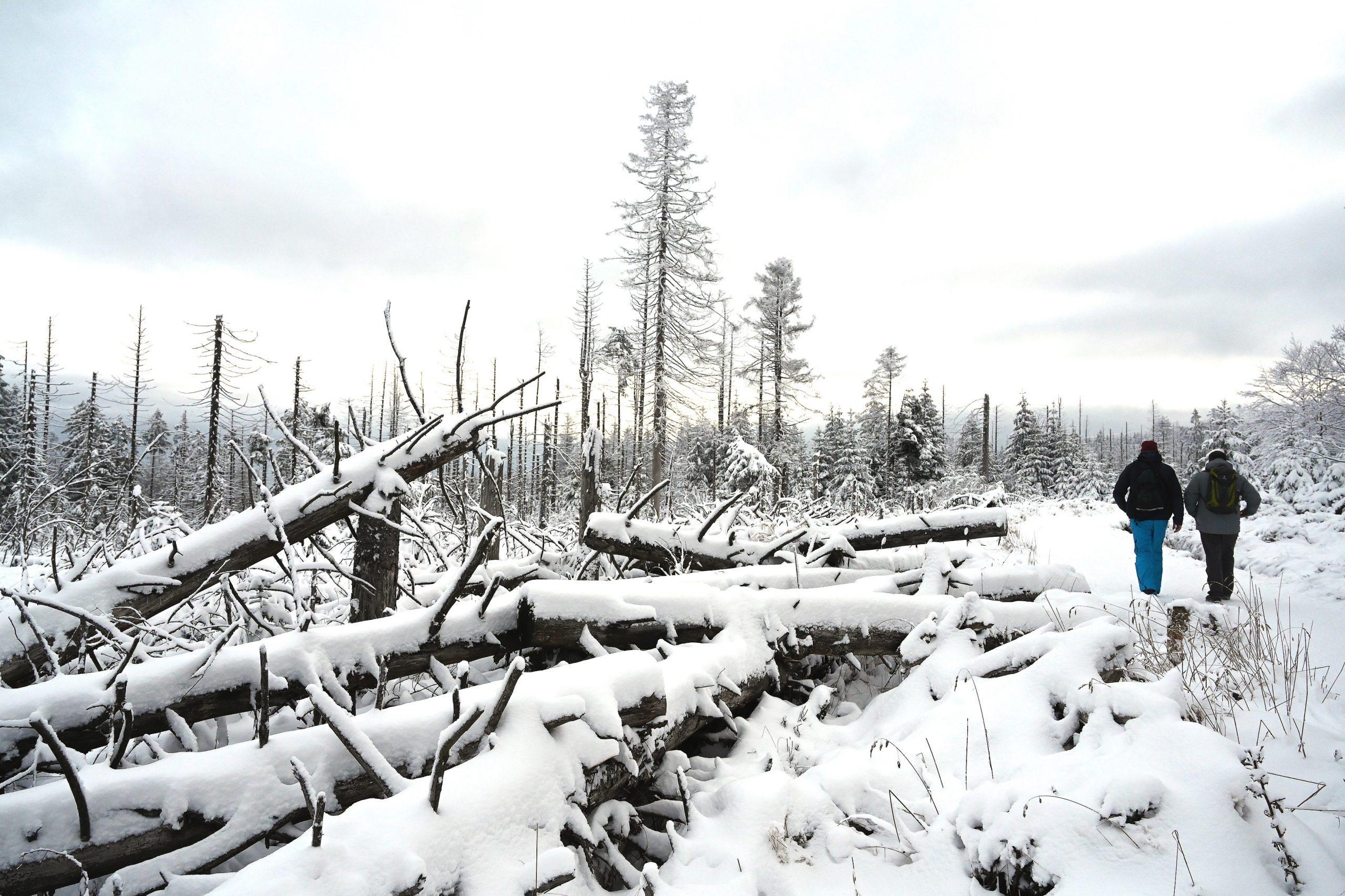 Das große Baumsterben in Deutschland